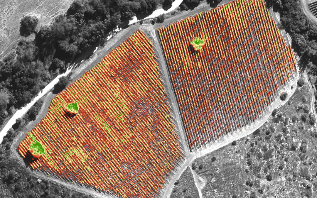 Selective Harvest: Improve Your Bottom Line With Remote Sensing