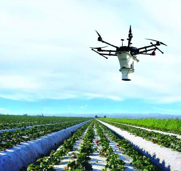 UAV-IQ & Koppert Introduce a New Aerial Biocontrol Service