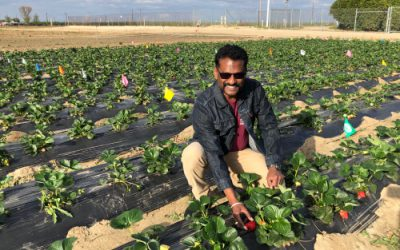 """""""The lack of incentives for adopting IPM is probably the strongest barrier"""" – Surendra Dara of the UC Cooperative Extension"""
