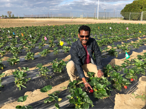 Surendra Dara, in a strawberry field