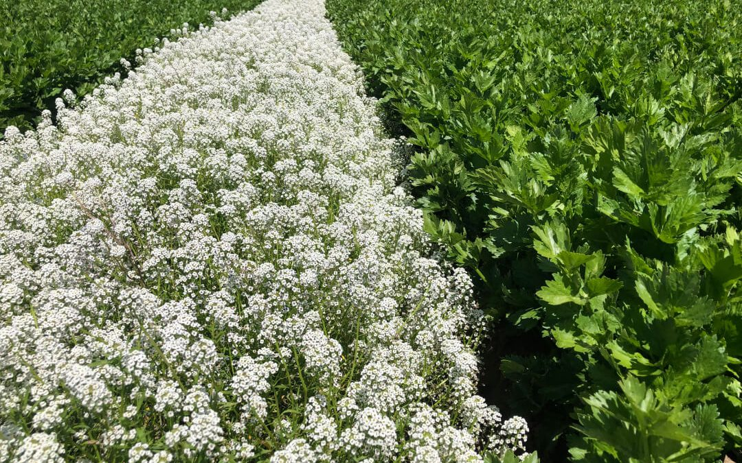 Why insectary habitats are key in organic agriculture