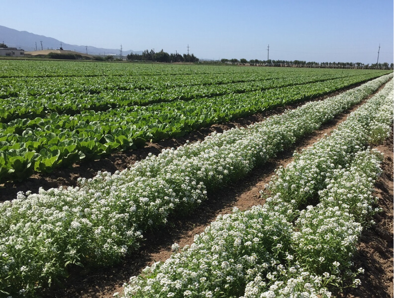 How Forward-thinking Vegetable Growers Are Getting Ahead Of Upcoming Pesticide Regulations